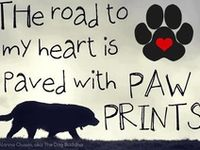 Any and all animals!! I love every one!!!!