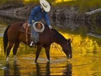 Cowboys & Westerns