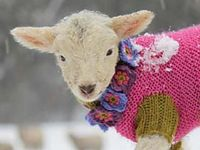 Wooly Creatures I Love