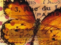 Butterflies, Papillons, Mariposas, Farfallas, Borboletas