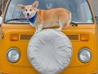 Cardigans, Pembrokes & Cardi/Pem Dogs - I LOVE THEM!