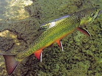 1000 images about fishing on pinterest rainbow trout for Virginia fish hatchery