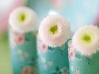 Bring Me Flowers...
