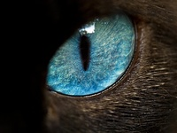 An animal's eyes have the power to speak a great language.  ~Martin Buber