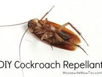 Some important Do it Yourself pest control tips for you. Live bug-free!