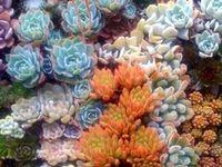 Cactus,Succulents,Bromeliads