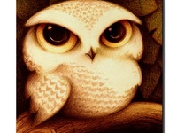 Owls, owls, and more owls!