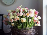 beautiful spring flowers to admire and inspire