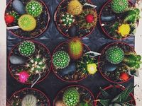 Creative plantings, whimsical settings, and inspirational greens!