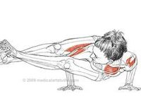 ° yoga anatomie ° on pinterest  anatomy tutorial crow
