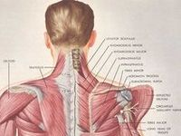 97 best body posture/pilates research images on pinterest