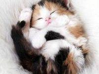Cats big and tiny