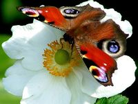 Nature Insects/amphibians/reptiles