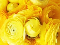 I ♥ Yellow