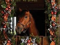 Loadin' & Livin' all things Horse