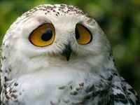 Owls Are Amazing..