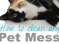 Toys and DIY Crafts for Cats