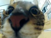 Quirky Cat Videos