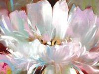 Floral Paintings 4