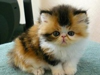 FELINES ARE SO AWESOME ... SO ADORABLE ... CUDDLY ... AND THEY GIVE SO MUCH LOVE AND SMILES