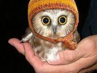 Owls..