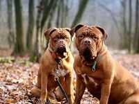 Dog Health & Training