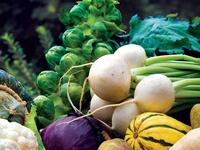 Garden & Sustainable Living