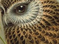 1000 Images About Art Owl On Pinterest Barn Owls Owl