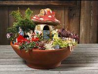 Mini/Fairy Gardens