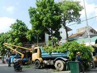 Dịch vụ cắt tỉa, đốn hạ cây xanh - Dịch vụ chặt cây tại Hà Nội LH Mr.Giáp 098.2222.998 / Dịch vụ cắt tỉa cây, đốn hạ cây, dịch vụ chặt cây tại Hà nội. Vinatrees cung cấp dịch vụ cắt tỉa, đốn hạ, chặt cây xanh tại hà nội với giá rẻ nhất. Lh. Mr. Giáp  098.2222.998