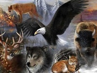 animals, birds, marine life, insects, etc-i have separate boards for big cats, eagles, horses, owls, wolves, elephants...