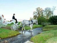 Horsedrawn Carriages- Twin Cedar Farm / Make your wedding/event a Fairytale Come True