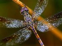 Dragonflies & Ladybugs