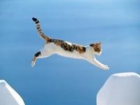 Pussycat in Greek