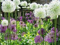 78 beste afbeeldingen over tuin op pinterest tuinen planters en kruidentuin - Eigentijds pergola hout ...