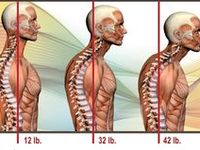 15 Best Human Anatomy Joints And Muscles Images On