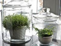 Ideas for convenient, accessible, fresh herbs