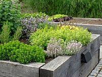 Raised bed garden inspiration