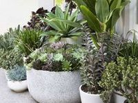 Drought-resistant landscaping ideas and succulents
