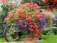 Garden - Creative Ideas