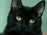 Cats Black
