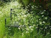 flower garden stuff