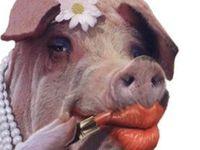 PIGS & HOGS