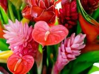Flowers plants garden of the caribbean on pinterest tropical