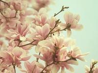 -Floral Prints-