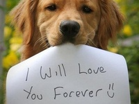 Dog Poems & Quotes