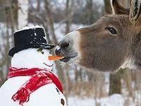 ~*~Snowman Love~*~