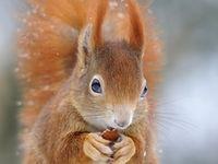 Animals - Squirrels