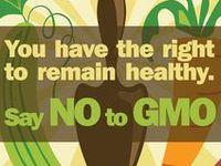 GMO and Monsanto