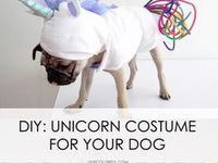 Best Dog Accessories